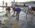 Seining at Pascagoula Beach